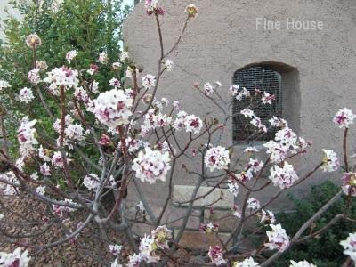 春を感じる🌼part2_e0339444_10111104.jpg