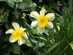 春だから_d0131255_11174991.jpg