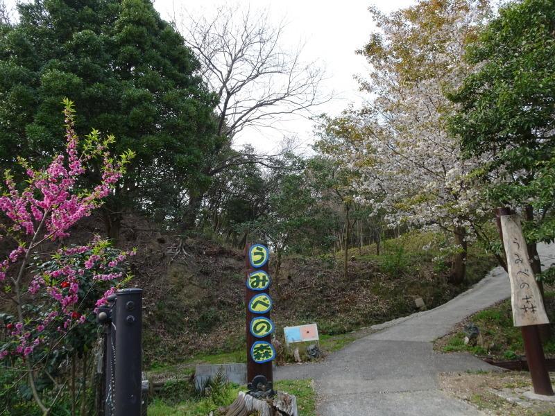 うみべの森のヤマザクラは満開である_c0108460_21031713.jpg