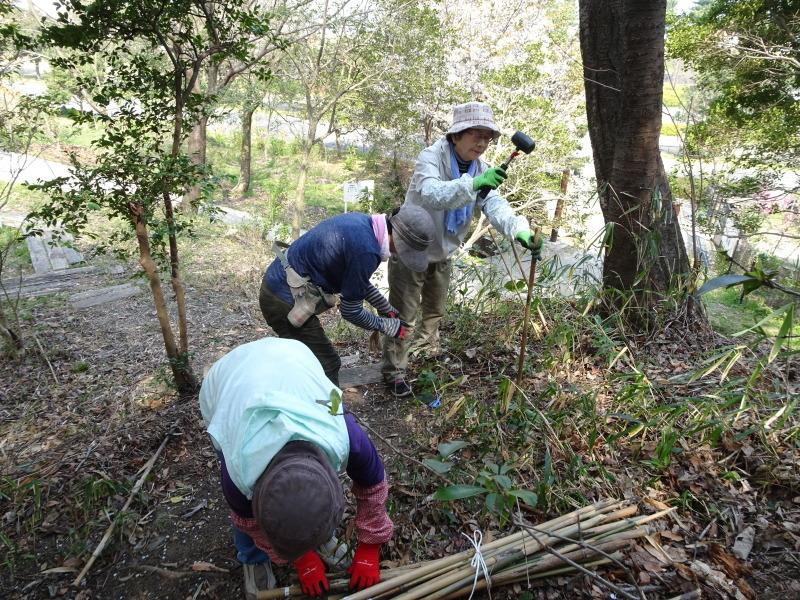 うみべの森のヤマザクラは満開である_c0108460_22001374.jpg