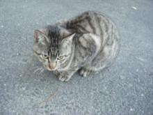 図書館と猫とポテチ_a0348473_12420283.jpg