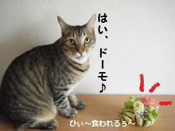 【アレンジ】ハロウィンは南瓜と猫だね♪_a0348473_13041259.jpg