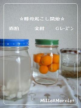 【動画】金柑酵母と酒粕酵母_a0348473_13074806.jpg