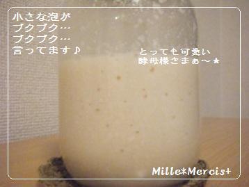 酒粕酵母完成 と 失敗ケー・・・_a0348473_13093845.jpg