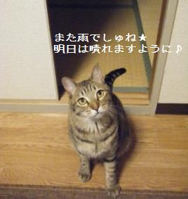 a0348473_13100820.jpg