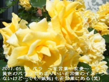 a0348473_13111609.jpg