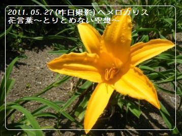 a0348473_13112471.jpg