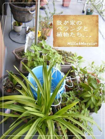 【記録】帰省中の植物のこと_a0348473_13164709.jpg