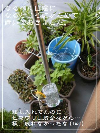 【記録】帰省中の植物のこと_a0348473_13164799.jpg