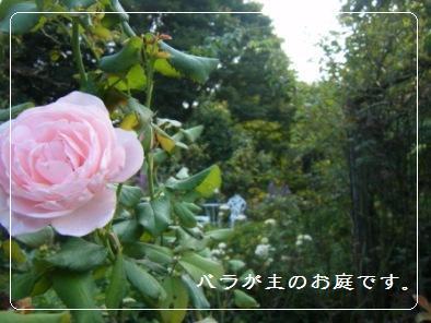 【記録】帰省中の植物のこと_a0348473_13164804.jpg
