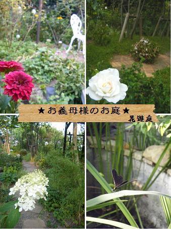 【記録】帰省中の植物のこと_a0348473_13164820.jpg