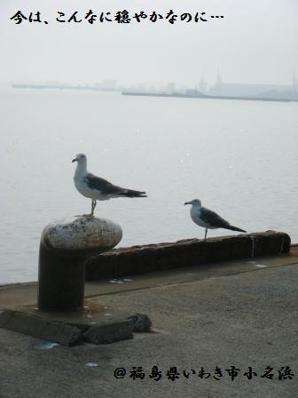 【レポ】小名浜の様子と復興フェア_a0348473_13165603.jpg