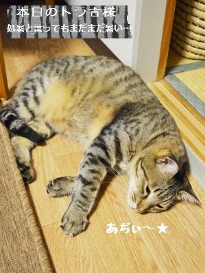 【雅子先生レシピ】ごま食パン&ツオップ_a0348473_13292066.jpg