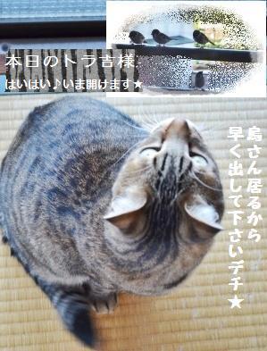 【レシピ】トマトのオイル和え&ルッヴァ~ン!_a0348473_13323685.jpg