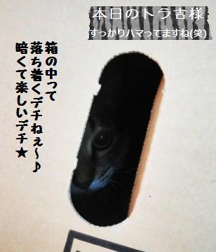 レーズン無ろ過ビール酵母☆_a0348473_13350906.jpg