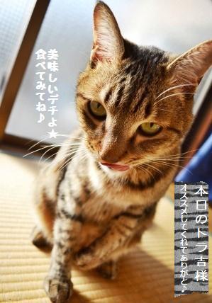 トマトと豚バラの醤油麹炒め_a0348473_13352586.jpg