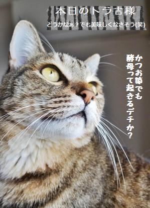 書き切れなかったこと&酒粕酵母_a0348473_13352683.jpg