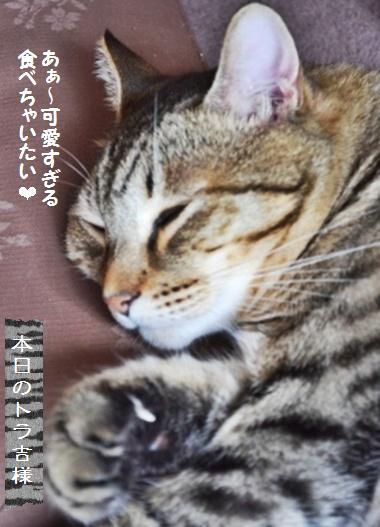 酒種ピタパン☆柿とラディッシュのサラダ_a0348473_13420528.jpg