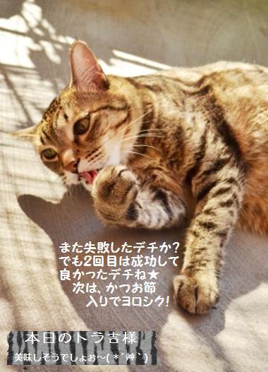 太白胡麻油deさわやかヨーグルトケーキ【レシピ】_a0348473_13420733.jpg