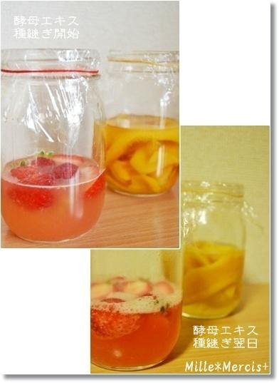濃厚いちご酵母とマンゴー酵母_a0348473_13475603.jpg