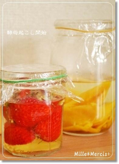 濃厚いちご酵母とマンゴー酵母_a0348473_13475626.jpg