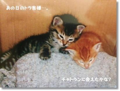 浜名湖花博2014とイルミネーション_a0348473_13480884.jpg