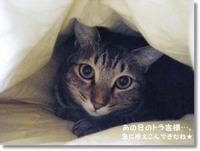 【ロティ・オラン】ヨーグルト種で作った食パン_a0348473_13530285.jpg