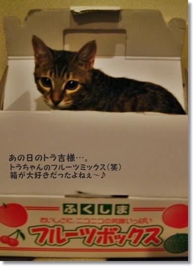 【レシピ】リメイク林檎でアーモンドのサクホロスコーン_a0348473_13533930.jpg