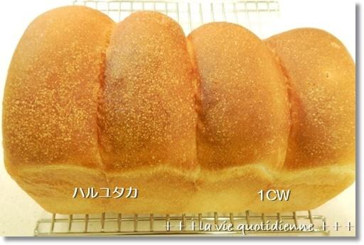 粉違いの山食の焼き比べ / クックパッドニュースに掲載♪_a0348473_14275968.jpg
