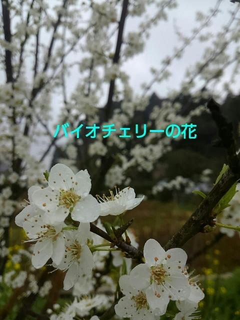 a0193175_23011383.jpg