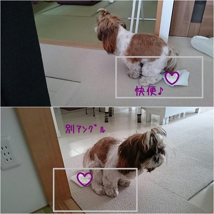 c0363378_16103667.jpg