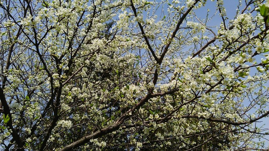 春が来たな_b0091187_2336583.jpg