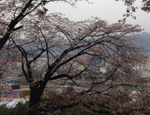 桜咲く  *\\(^o^)/*_f0039487_11463348.jpg