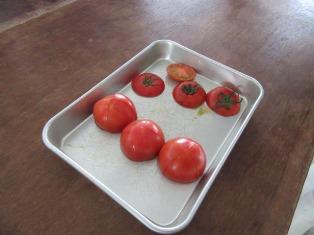 静岡のトマト「アメーラ!」 _a0154793_12163525.jpg