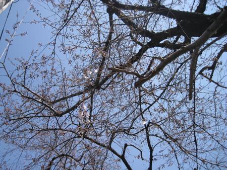 お花見日和_f0061394_10521916.jpg