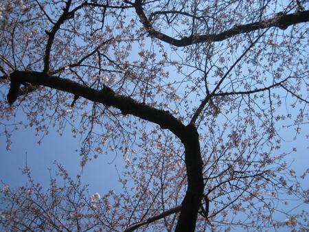 お花見日和_f0061394_10524941.jpg