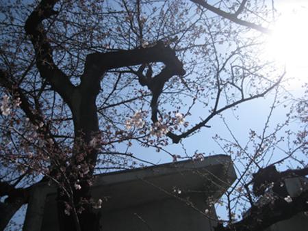 お花見日和_f0061394_10531772.jpg