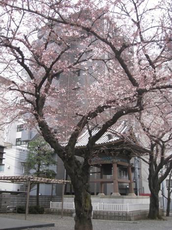 お花見日和_f0061394_1135255.jpg