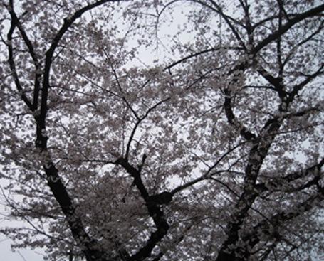 お花見日和_f0061394_1143933.jpg