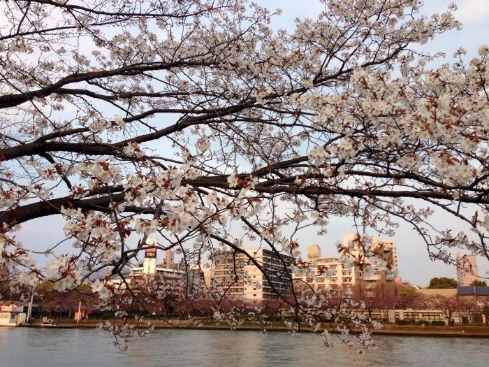 大阪のMIギャラリー8周年記念展終了_c0100195_10155436.jpg