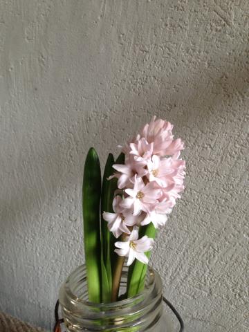 3月の花_e0055098_12202661.jpg