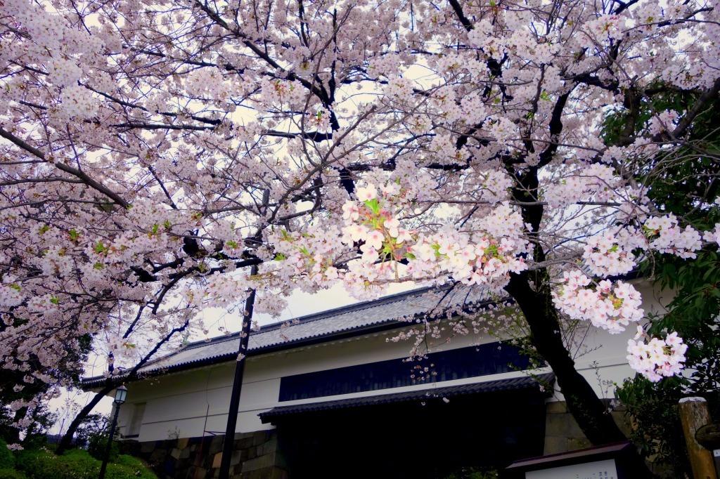 【東京】田安門_c0348200_23073300.jpg
