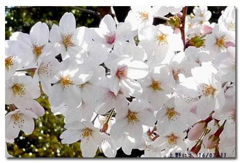 お花見 Week_c0051105_7202088.jpg