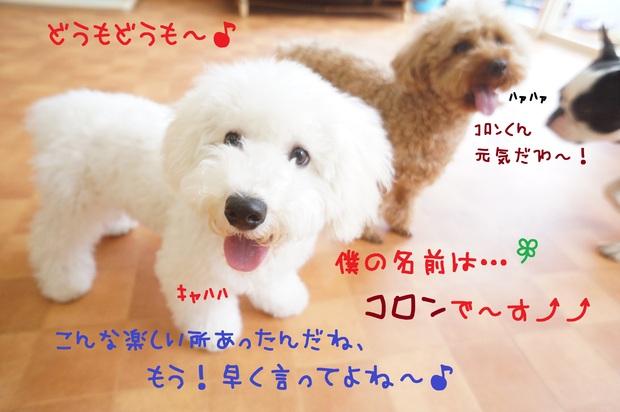 d0220513_16561014.jpg