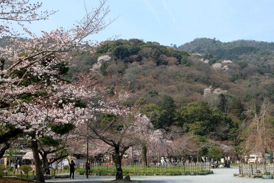 16桜だより17 嵐山2 渡月橋あたり_e0048413_18181421.jpg