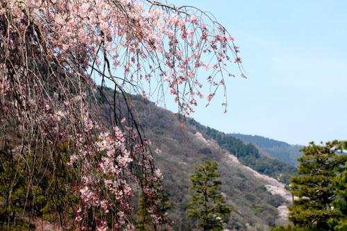 16桜だより17 嵐山2 渡月橋あたり_e0048413_18182575.jpg