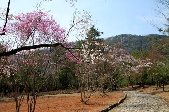 16桜だより18 嵐山3 亀山公園_e0048413_20423480.jpg