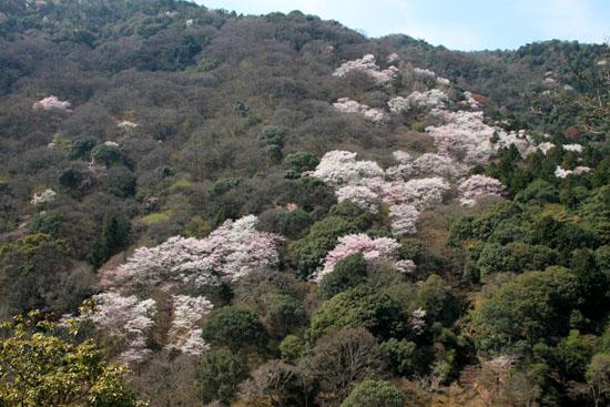 16桜だより18 嵐山3 亀山公園_e0048413_20425748.jpg