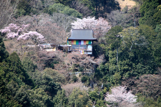 16桜だより18 嵐山3 亀山公園_e0048413_20431826.jpg