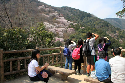 16桜だより18 嵐山3 亀山公園_e0048413_20433654.jpg